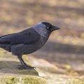 Fauna Birds 147