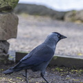 Fauna Birds 148