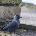 Fauna Birds 149
