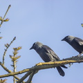 Fauna Birds 150