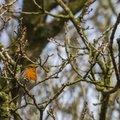 Fauna Birds 152