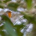 Fauna Birds 153