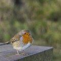 Fauna Birds 154