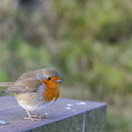 Fauna Birds 155