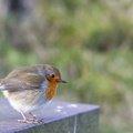 Fauna Birds 156