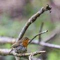 Fauna Birds 157