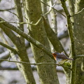 Fauna Birds 159