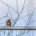 Fauna Birds 161