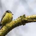 Fauna Birds 162