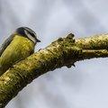 Fauna Birds 163