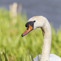 Fauna Birds 166