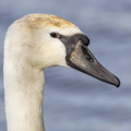 Fauna Birds 167