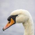 Fauna Birds 168