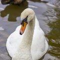 Fauna Birds 173