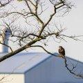 Fauna Birds 177