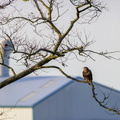 Fauna Birds 178