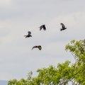 Fauna Birds 185
