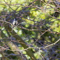 Fauna Birds 201