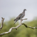 Fauna Birds 202