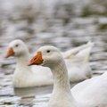 Fauna Birds 206