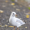 Fauna Birds 210