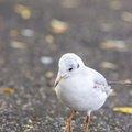 Fauna Birds 211