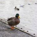Fauna Birds 214