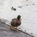 Fauna Birds 215
