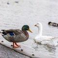 Fauna Birds 216