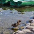 Fauna Birds 217