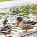 Fauna Birds 218