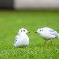 Fauna Birds 219