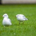 Fauna Birds 220