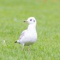 Fauna Birds 221