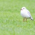 Fauna Birds 222