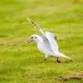 Fauna Birds 224