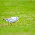 Fauna Birds 225