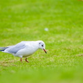 Fauna Birds 226