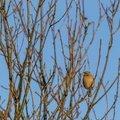 Fauna Birds 228