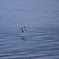 Fauna Birds 229