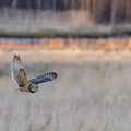 Fauna Birds 235