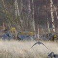 Fauna Birds 237
