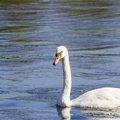 Fauna Birds 246