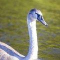 Fauna Birds 251