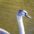 Fauna Birds 252
