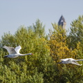 Fauna Birds 253