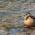 Fauna Birds 261