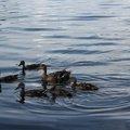 Fauna Birds 264