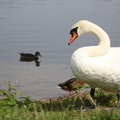 Fauna Birds 266