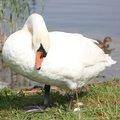 Fauna Birds 267